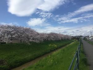 写真 2016-04-04 12 26 13